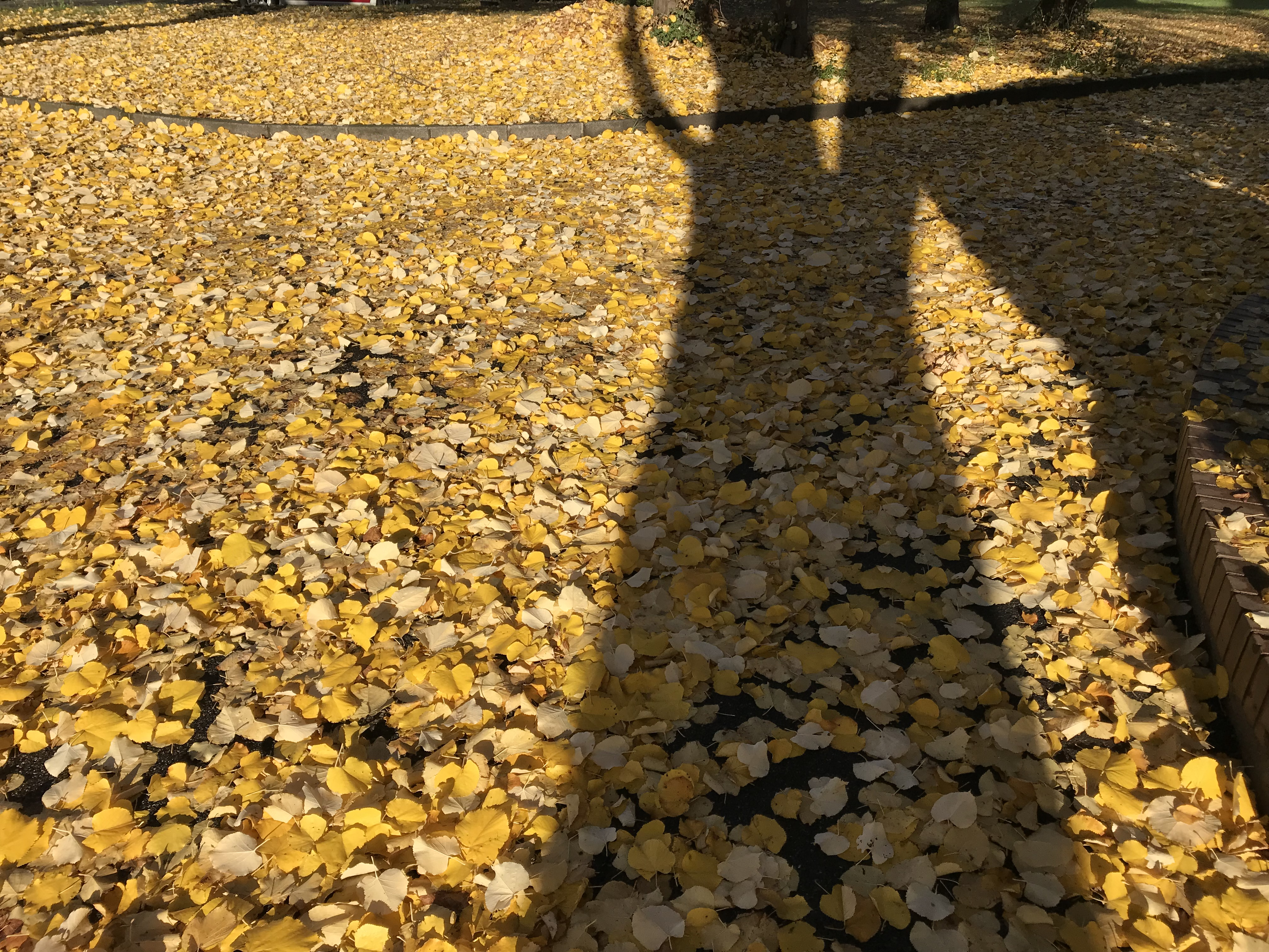 Seckenheim im Herbst